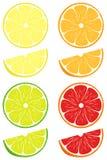 De citrusvrucht snijdt vectorreeks Stock Afbeelding