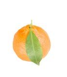 De citrusvrucht van de mandarijn Stock Afbeeldingen