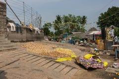 De citrusvruchtenschillen drogen op grond in Dindigul royalty-vrije stock afbeeldingen