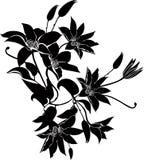 De clematis bloeit vector Royalty-vrije Stock Foto's