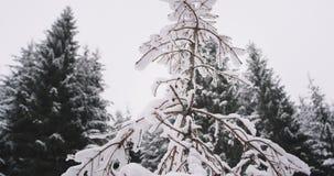 De close-up detailleert in het midden van sneeuwbos een kleine die Kerstboom allen wordt behandeld met sneeuw Langzame moties stock footage