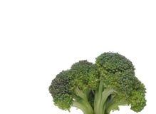 De close-up die van broccoli als een boom kijkt Stock Fotografie