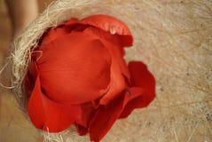 De close-up nam bloemblaadjes toe Royalty-vrije Stock Foto