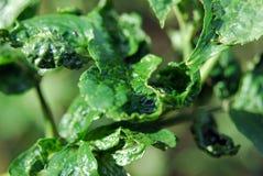 De close-up van bladeren royalty-vrije stock foto
