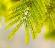 De close-up van bladeren Stock Foto's