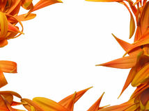 De close-up van bloemblaadjes Royalty-vrije Stock Fotografie