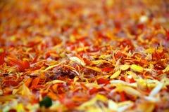 De close-up van bloemblaadjes Royalty-vrije Stock Afbeeldingen
