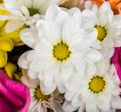 De close-up van bloemen Royalty-vrije Stock Fotografie
