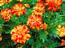 De close-up van bloemen royalty-vrije stock afbeeldingen