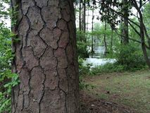 De close-up van de boomboomstam stock foto