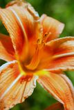 De close-up van de bloem royalty-vrije stock afbeelding