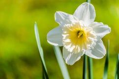 De close-up van de bloem Stock Foto