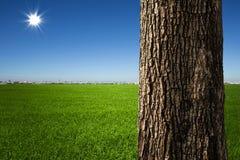 De close-up van de boomboomstam stock afbeeldingen