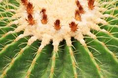 De close-up van de cactus Royalty-vrije Stock Afbeeldingen