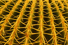 De close-up van de cactus Royalty-vrije Stock Afbeelding