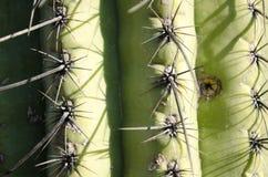 De close-up van de cactus Royalty-vrije Stock Fotografie
