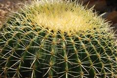 De close-up van de cactus Royalty-vrije Stock Afbeelding