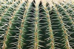 De close-up van de cactus Stock Foto's