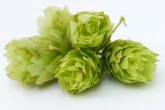 De close-up van de hop Royalty-vrije Stock Afbeelding