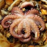 De close-up van de octopus Royalty-vrije Stock Afbeelding