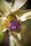 De Close-up van de orchidee stock afbeelding