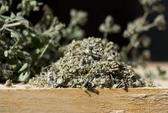De close-up van de orego stock afbeelding
