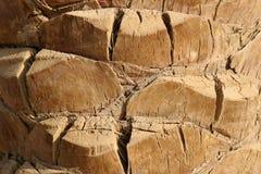 De close-up van de palm Stock Foto's