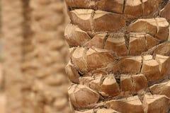 De close-up van de palm Stock Foto
