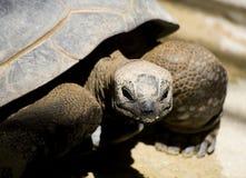De close-up van de schildpad Royalty-vrije Stock Foto