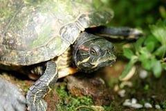 De close-up van de schildpad Royalty-vrije Stock Fotografie