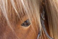De close-up van het de poneyoog van Shetland Stock Foto's