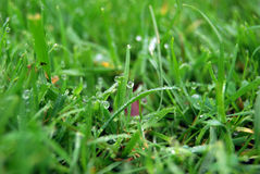 De close-up van het gras stock foto