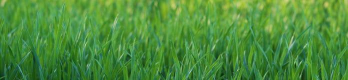 De close-up van het gras Stock Afbeelding