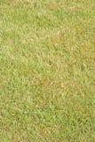 De close-up van het gras en van het mos: groene achtergrond? royalty-vrije stock foto