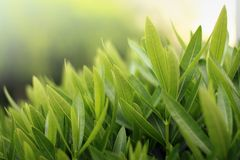 De close-up van het groen royalty-vrije stock afbeelding