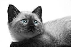 De Close-up van het katje Royalty-vrije Stock Fotografie