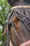 De close-up van het paard Stock Foto's