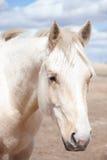 De close-up van het paardhoofd royalty-vrije stock afbeeldingen
