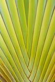 De close-up van het palmblad royalty-vrije stock foto