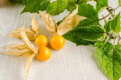 De close-up van het Physalisfruit Stock Foto