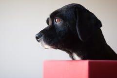 Het Portret van de Hond van het profiel stock foto's