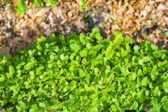 De Close-up van het tuinbed Stock Afbeelding