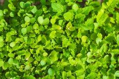 De Close-up van het tuinbed Stock Foto's