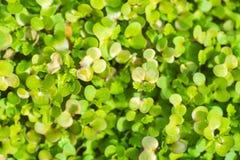 De Close-up van het tuinbed Royalty-vrije Stock Afbeelding