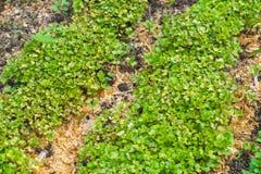 De Close-up van het tuinbed Royalty-vrije Stock Foto's