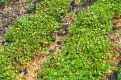 De Close-up van het tuinbed Royalty-vrije Stock Fotografie