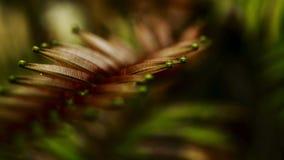 De close-up van het varenblad stock afbeeldingen