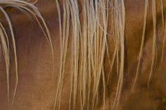 De close-up van manen Royalty-vrije Stock Foto's