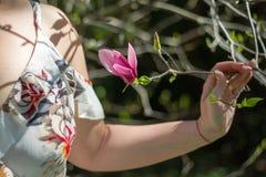 De close-up van meisjes overhandigt het houden van een tak met een bloeiende knop van een roze magnolia royalty-vrije stock foto's