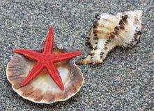 De close-up van zeeschelpen op zand Stock Foto